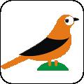 礼貌鸟康复app下载_礼貌鸟康复app最新版免费下载