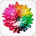 抖屏动态壁纸app下载_抖屏动态壁纸app最新版免费下载