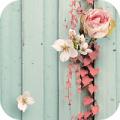 那青春-梦象动态壁纸app下载_那青春-梦象动态壁纸app最新版免费下载