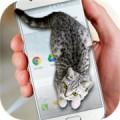 猫咪桌宠app下载_猫咪桌宠app最新版免费下载