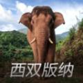 亚洲象预警下载最新版_亚洲象预警app免费下载安装